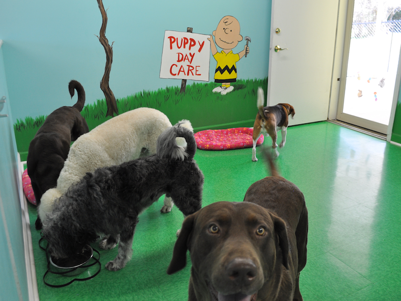 Doggie Daycare at Puppy Love -N- Style