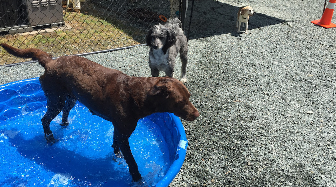 Water Days at Puppy Love -N- Style Daycare
