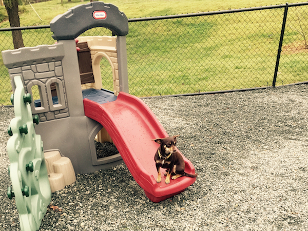Outdoor Play at Puppy Love -N- Style